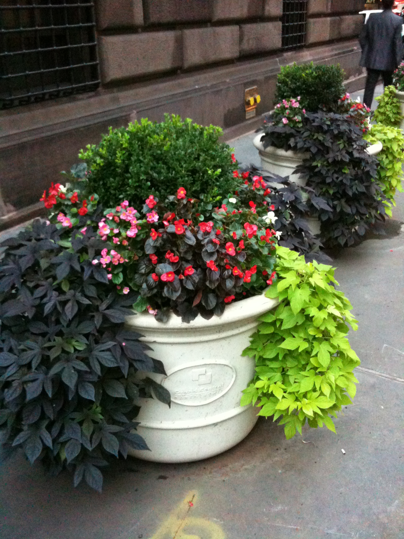 Curbside Catastrophe Successful Fall Planters Erbology