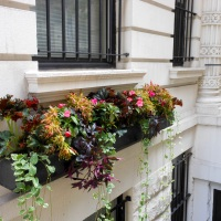Sidewalk Sensation: Elegant Window Boxes