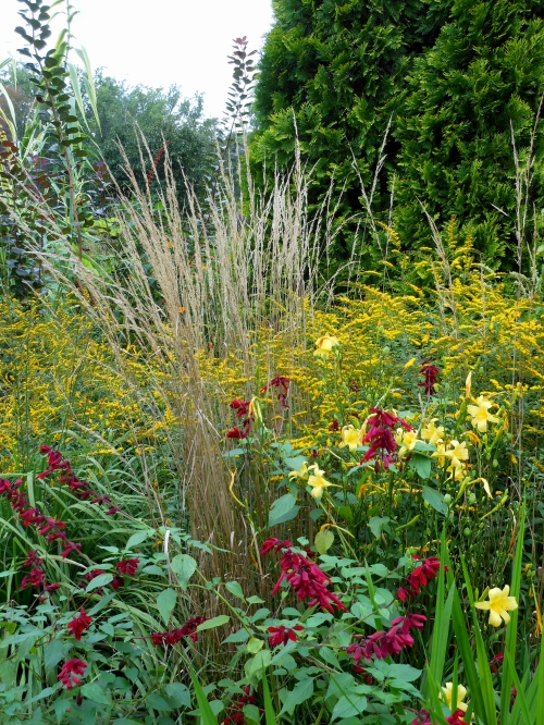 Planting Goldenrod In The Garden: Bring Sunshine To Your Garden With Goldenrod