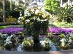 Longwood Orchid Show Jeffrey Erb