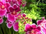 Orchid 2 Jeffrey Erb