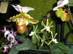 Slipper Orchid Jeffrey Erb
