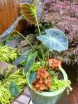 Container Garden Jeffrey Erb