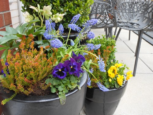 Restrain Your Color Palette to Create an Understated Spring Planting