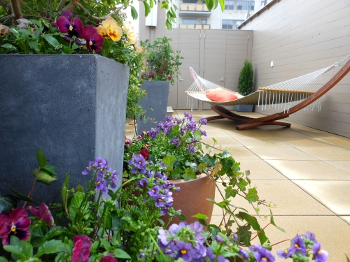 Torenia and Pansies Grace this NYC Rooftop Garden