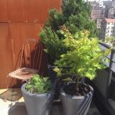 Greenwich Village Rooftop Garden